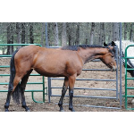 Horse Classified Ad